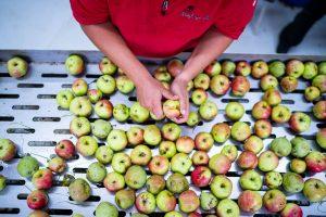 Quirin Reitsberger beim vorbereiten der Äpfel zum Saftpressen